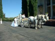 horse carriage rental photo p
